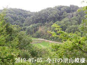 2019-07・05 今日の里山模様・・・ (3).JPG