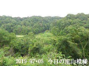 2019-07・05 今日の里山模様・・・ (5).JPG