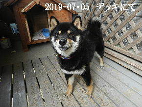 2019-07・05 今日の麻呂 (1).JPG
