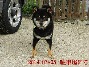 2019-07・05 今日の麻呂 (3).JPG
