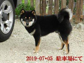 2019-07・05 今日の麻呂 (4).JPG