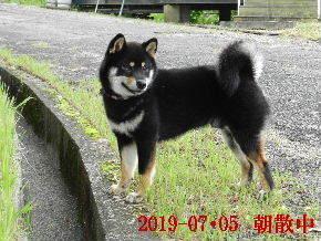 2019-07・05 今日の麻呂 (5).JPG