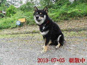 2019-07・05 今日の麻呂 (6).JPG