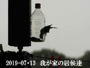 2019-07・13 里の野鳥達・・・ (1).JPG