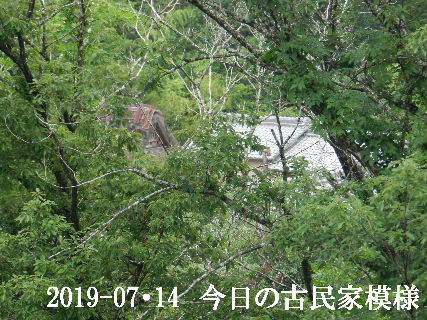2019-07・14 今日の古民家模様.JPG
