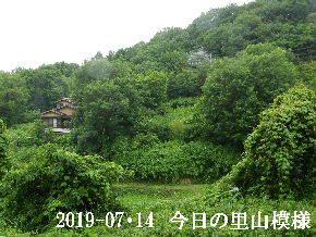 2019-07・14 今日の里山模様・・・ (4).JPG
