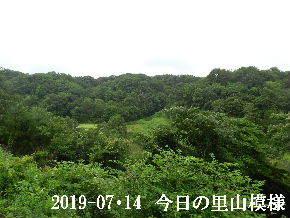 2019-07・14 今日の里山模様・・・ (5).JPG