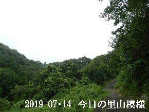 2019-07・14 今日の里山模様・・・ (6).JPG