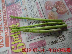 2019-07・14 我が家のスナップ (2).JPG