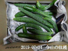 2019-07・14 我が家のスナップ (3).JPG