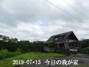 2019-07・15 今日の里山模様・・・ (1).JPG