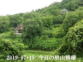 2019-07・15 今日の里山模様・・・ (4).JPG