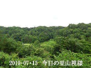 2019-07・15 今日の里山模様・・・ (5).JPG