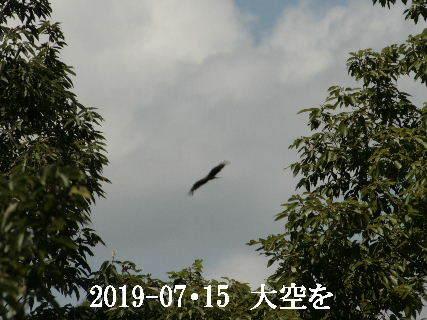 2019-07・15 里の野鳥達 (1).JPG