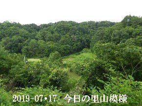 2019-07・17 今日の里山模様・・・ (3).JPG