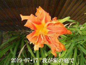 2019-07・17 我が家のスナップ・・・ (2).JPG