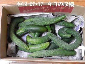 2019-07・17 我が家のスナップ・・・ (5).JPG