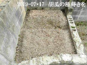 2019-07・17 我が家のスナップ・・・ (7).JPG