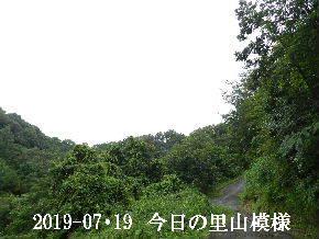2019-07・19 今日の里山模様・・・ (10).JPG