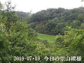 2019-07・19 今日の里山模様・・・ (4).JPG