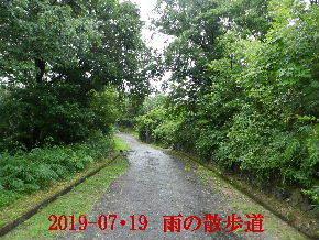 2019-07・19 今日の里山模様・・・ (6).JPG