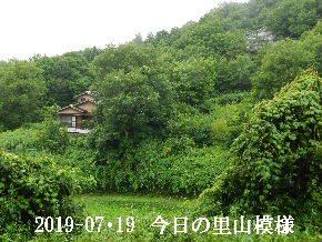 2019-07・19 今日の里山模様・・・ (9).JPG