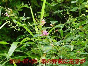 2019-07・20 今日の出遭い・・・ (1).JPG