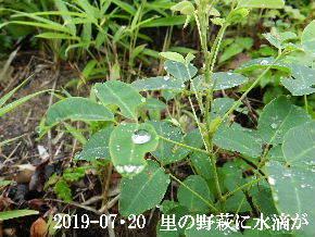 2019-07・20 今日の出遭い・・・ (4).JPG
