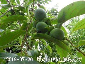2019-07・20 今日の出遭い・・・ (7).JPG