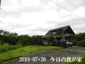 2019-07・20 今日の里山模様・・・ (1).JPG