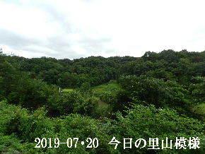 2019-07・20 今日の里山模様・・・ (3).JPG
