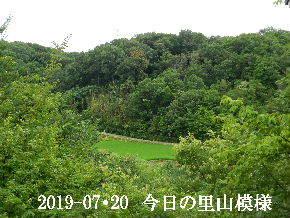 2019-07・20 今日の里山模様・・・ (4).JPG