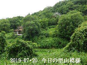 2019-07・20 今日の里山模様・・・ (5).JPG