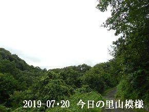2019-07・20 今日の里山模様・・・ (6).JPG