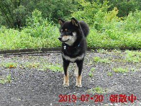 2019-07・20 今日の麻呂 (6).JPG