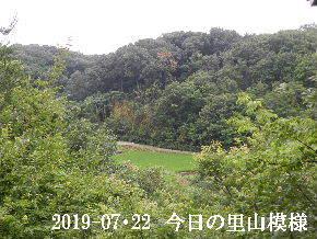 2019-07・22 今日の里山模様・・・ (4).JPG