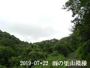 2019-07・22 今日の里山模様・・・ (6).JPG