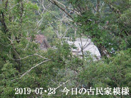 2019-07・23 今日の古民家模様.JPG