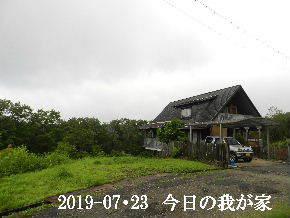 2019-07・23 今日の里山模様・・・ (1).JPG