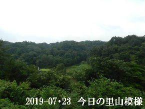 2019-07・23 今日の里山模様・・・ (3).JPG