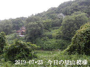 2019-07・23 今日の里山模様・・・ (5).JPG