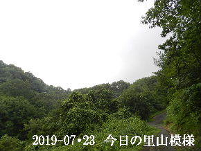 2019-07・23 今日の里山模様・・・ (6).JPG