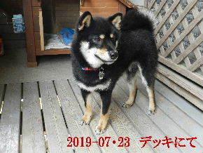 2019-07・23 今日の麻呂 (1).JPG