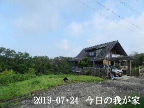2019-07・24 今日の里山模様・・・ (1).JPG