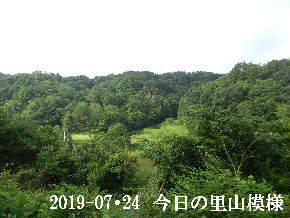 2019-07・24 今日の里山模様・・・ (3).JPG