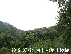2019-07・24 今日の里山模様・・・ (6).JPG