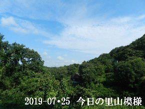 2019-07・25 今日の里山模様・・・ (7).JPG