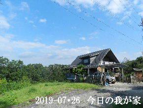 2019-07・26 今日の里山模様・・・ (1).JPG