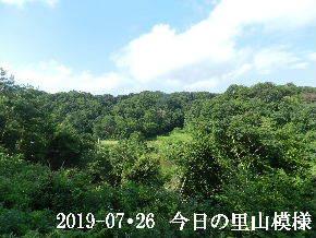 2019-07・26 今日の里山模様・・・ (3).JPG