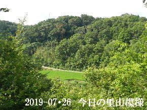 2019-07・26 今日の里山模様・・・ (4).JPG